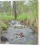Water Flows After A May Rain Wood Print