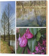 Water Garden Three Views Wood Print