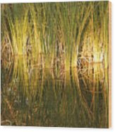 Water Grass In Sunset Wood Print