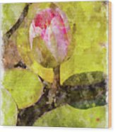 Water Hyacinth Bud Wc Wood Print