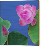 Water Lili Wood Print