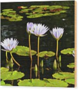Water Lilies 1 Wood Print