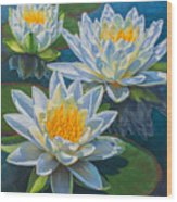 Water Lilies 12 - Fire And Ice Wood Print