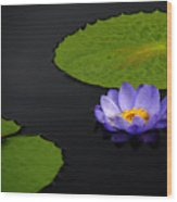 Water Lilies, Aligned  Wood Print