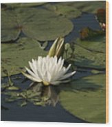 Water Lilies And Pads Wood Print