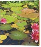 Water Lilies At San Juan Capistrano Wood Print
