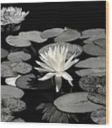 Water Lilies In Black And White Wood Print