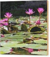 Water Lilies Tam Coc  Wood Print
