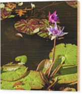 Water Lillies At Central Park Wood Print