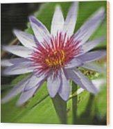 Water Lillies At Waimea I Wood Print by Elizabeth Hoskinson