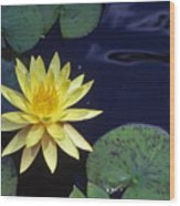 Water Lilly - 1 Wood Print