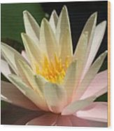 Water Lilly 1 Wood Print