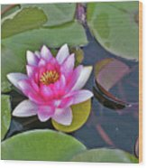 Water Lilly  And Lilly Pads Wood Print