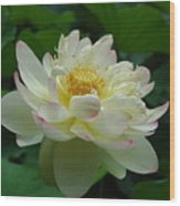 Water Lilly Dancing Wood Print