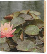 Water Lilly In Summer Wood Print