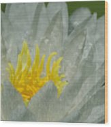Water Lilly Morph Wood Print