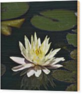 Water Lilly  Wood Print
