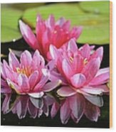 Water Lilly Triplets Wood Print