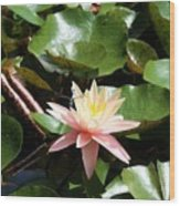 Water Lilly With Dragonfly Wood Print