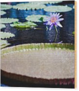 Water Lily - Water-platter Textured Wood Print