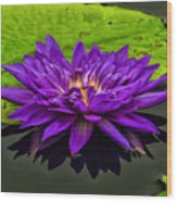 Water Lily 15-2 Wood Print