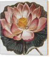 Water Lily, 1806 Wood Print