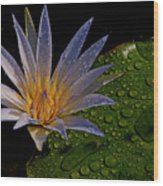 Water Lily 2 Wood Print by Chaza Abou El Khair
