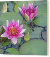 Water Lily #2 Wood Print