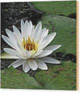 Water Lily 2 Wood Print