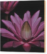 water lily 27 Dark Pink Night Blooming Water Lily Wood Print