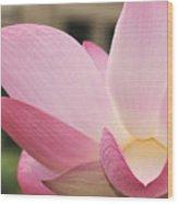 water lily 32 Pink Lotus Macro Wood Print