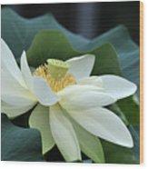 water lily 34 Yellow Lotus I Wood Print