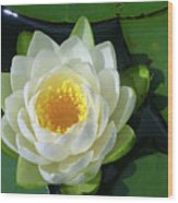 Water Lily 3437 Wood Print