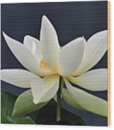 Water Lily 36 Wood Print