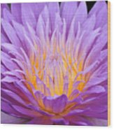 water lily 55 Ultraviolet Wood Print
