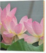 water lily 57 Pink Lotus Wood Print