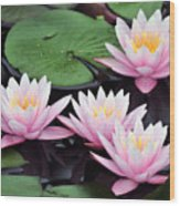 water lily 91 Sunny Pink Water Lily Wood Print