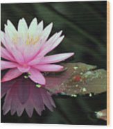 water lily 92 Sunny Pink Water Lily with Lily Pad Wood Print