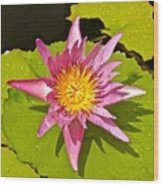 Water Lily After Rain 3 Wood Print