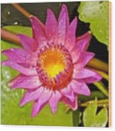 Water Lily After Rain 4 Wood Print