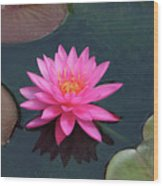 Water Lily - Afternoon Delight Wood Print