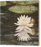 Water Lily And Pads Wood Print
