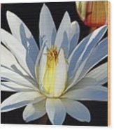 Water Lily At Dusk Wood Print