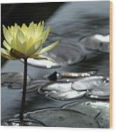 Water Lily And Silver Leaves Wood Print