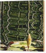 Water Lily Budd Wood Print
