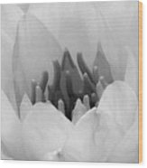 Water Lily - Burnin' Love 05 - Bw - Water Paper Wood Print