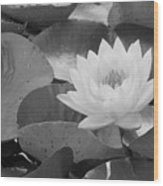 Water Lily - Burnin' Love 13 - Bw Wood Print