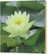 Water Lily - Burnin' Love 14 Wood Print