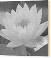 Water Lily - Burnin' Love 15 - Bw - Water Paper Wood Print