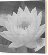 Water Lily - Burnin' Love 16 - Bw - Water Paper Wood Print